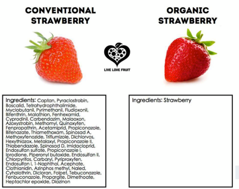 Conventional Strawberry V.S. Organic Strawberry