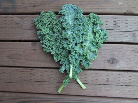 Why Kale is the Must Have Superfood For a Healthy Diet